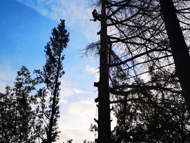 entreprise d 39 lagage abattage d 39 arbres lagueur grimpeur cordiste aude. Black Bedroom Furniture Sets. Home Design Ideas