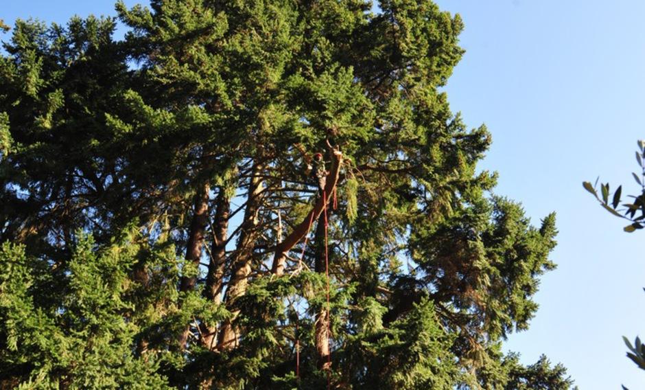 Entreprise d 39 lagage et abattage d 39 arbres cypr s des for Responsable des espaces verts