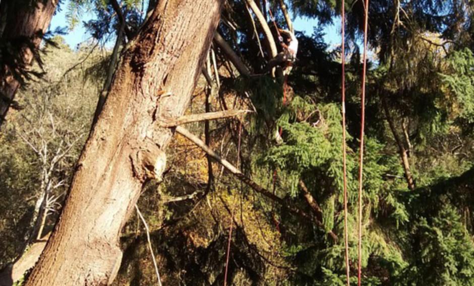 elagage arbre 66