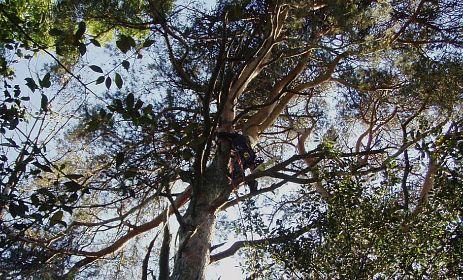 élagage, castelnaudary, Aude, cyprès des arbres, http://www.cypresdesarbres.com