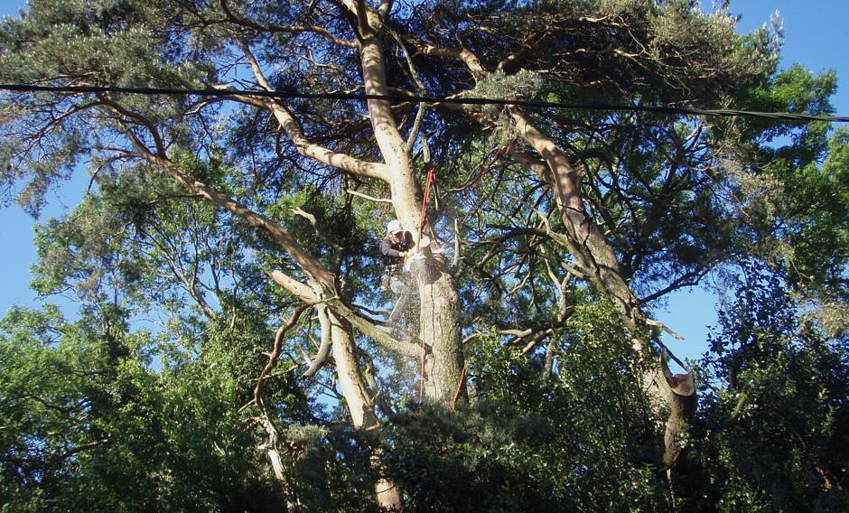élagage, abattage, Villefranche de Lauragais,élagage, abattage, Castelnaudary, Aude, Cyprès Des Arbres, http://www.cypresdesarbres.com